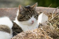 Cat in wheelbarrow royalty free stock images