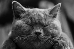 Cat, Whiskers, Black, Black And White Royalty Free Stock Images