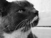 Cat, Whiskers, Black, White stock images