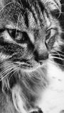Cat, Whiskers, Black And White, Black stock photography