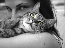 Cat, Whiskers, Black And White, Black Royalty Free Stock Photo