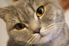 Cat, Whiskers, Eye, Mammal Royalty Free Stock Photos