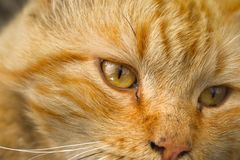 Cat, Whiskers, Face, Fauna stock images