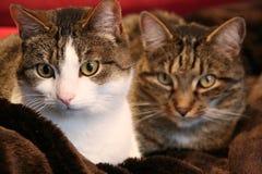 Cat, Whiskers, Fauna, Mammal