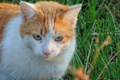 Cat, Whiskers, Fauna, Small To Medium Sized Cats Stock Photos