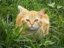 Cat, Whiskers, Grass, Fauna