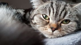 Cat, Whiskers, Mammal, Eye Royalty Free Stock Images