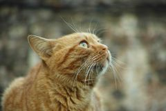 Cat, Whiskers, Mammal, Fauna Stock Images
