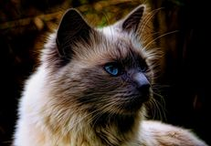 Cat, Whiskers, Mammal, Small To Medium Sized Cats Stock Image