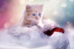 Cat, Whiskers, Mammal, Small To Medium Sized Cats stock photos