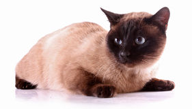 Cat on white Stock Photography