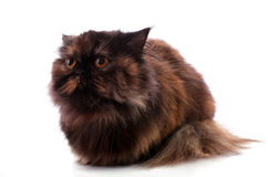 Cat on white Stock Image