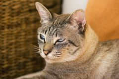 cat white Στοκ εικόνες με δικαίωμα ελεύθερης χρήσης