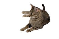 Cat On White. Domestic cat relaxing on isolated white background Stock Photo