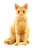 Cat  on white Royalty Free Stock Photos