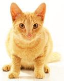 Cat  on white Royalty Free Stock Photos