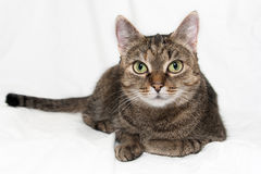 Cat On White Background. Sweet kat on a clean white background Royalty Free Stock Images