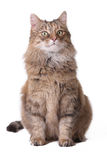 Cat on a white background Royalty Free Stock Photos