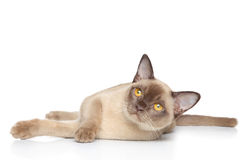 Cat on a white background Stock Photography