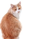 Cat on a white background Stock Image