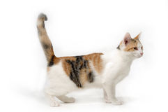 Cat on white background Stock Photos