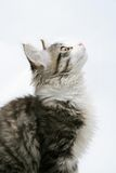 Cat on white background Royalty Free Stock Photos