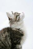 Cat on white background. Kitty looks upwards Royalty Free Stock Photos