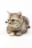 Cat on white background Stock Photo