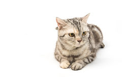 Cat on white background Royalty Free Stock Photography