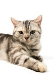 Cat on white background Stock Photos