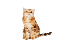 Cat on a white background Royalty Free Stock Images