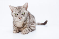 Cat on the white background. Stock Photos