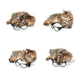 Cat on white background. Cat and glasses on white background. set Royalty Free Stock Images