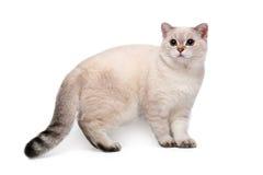 Cat on white background Royalty Free Stock Image