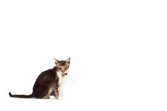 Cat white background Royalty Free Stock Photography