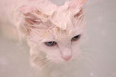 Cat. Stock Photography