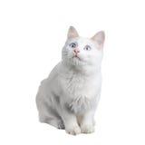 Cat on white Stock Photos