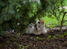 CAT WHITE-BLACK стоковое фото rf