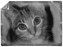 Cat. White black card with a kitten begging eyes tabby long hair mustache Stock Photo
