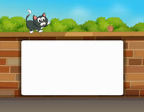 A cat and a white board Royalty Free Stock Photography