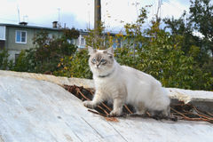 Cat. White cat climbed onto the roof of the building Stock Photo