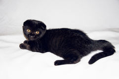 Cat on the white cloth Royalty Free Stock Image