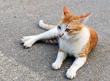 Cat White Cute Smile Sitting en el camino del piso que juega afuera Fotos de archivo libres de regalías