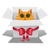 Cat in a white gift box with red bow. royalty free illustration