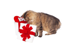Cat about white gift with red heart Royalty Free Stock Photos