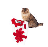 Cat about white gift with red heart Royalty Free Stock Image