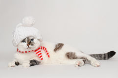 Cat in a white hat with a pompom and scarf. Pretty cat in a white hat with a pompom and striped scarf Stock Photo