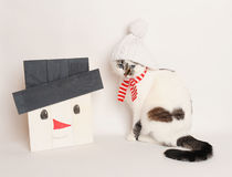 Cat in a white hat and scarf with wooden snowman. Cat in a white hat and striped scarf with handmade snowman Stock Images