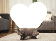 Cat with white heart Royalty Free Stock Photos