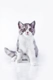 Cat on white, kitten, cute, fluffy ball. Beautiful kittens on a white background, playing, sitting, portrait stock image